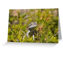 Perched Reptile Greeting Card