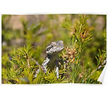 Perched Reptile Poster