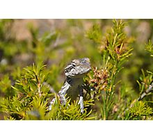 Perched Reptile Photographic Print
