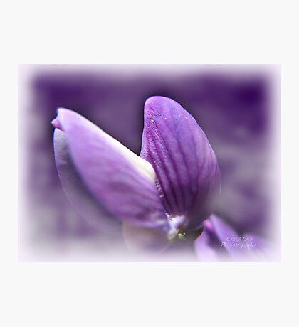 Purple Diva Photographic Print