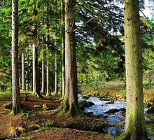 Dolgellau Woods North Wales by angel1978