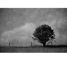 Tree and Sky in Black and White Photographic Print