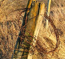 Fence Posts in the Fall - Northeast Iowa by Deb Fedeler
