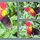 Black Butterfly collage by missmoneypenny