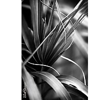 Luscious Lines Photographic Print