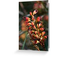 Bottle Brush Flower (1) Greeting Card
