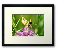 Snacking in the shade. Framed Print