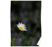giant daisy Poster