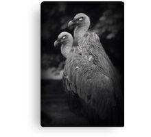 dark vultures Canvas Print