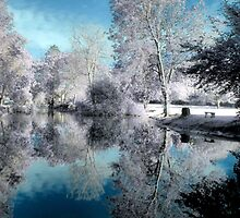 Blue Reflections by Cat Perkinton