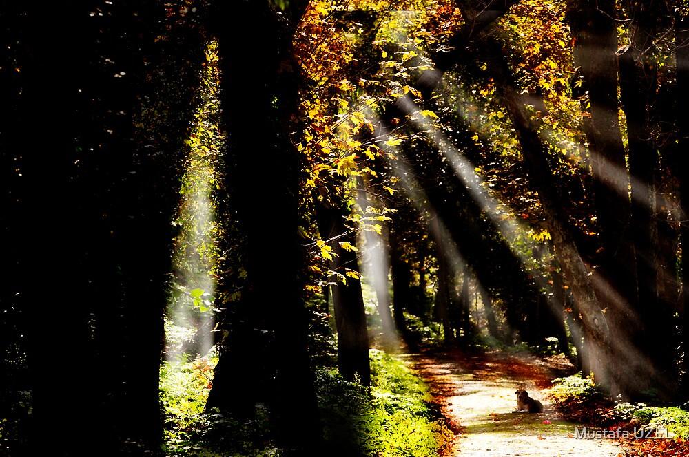 Shining by Mustafa UZEL