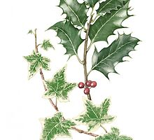 Christmas Holly and Ivy in Watercolour by Fiona Cross