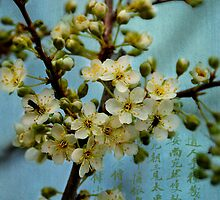 Spring by NancyMorgantini