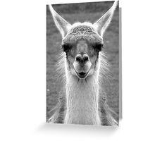 Llamarama ding dong Greeting Card