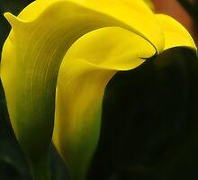 Golden Curves by Susie Peek