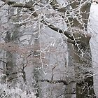 Icy tracery by Jane Corey