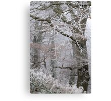 Icy tracery Canvas Print