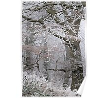 Icy tracery Poster