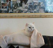 Hmmm. My blanket! by trisha22