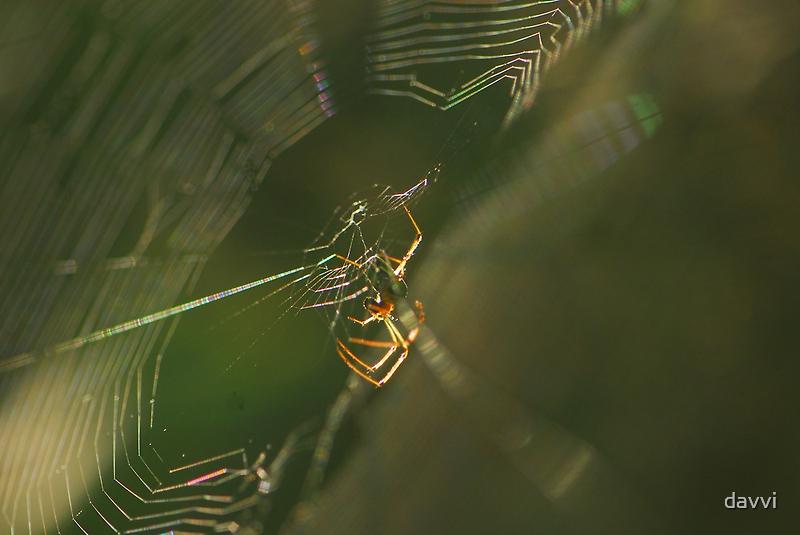 web by davvi