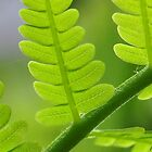 Fern Frond by Nancy Barrett