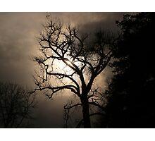 """Mysterious Night Lighting Behind Barren Tree"" Photographic Print"