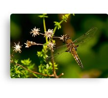 Four Spotted Skimmer Dragonfly Canvas Print