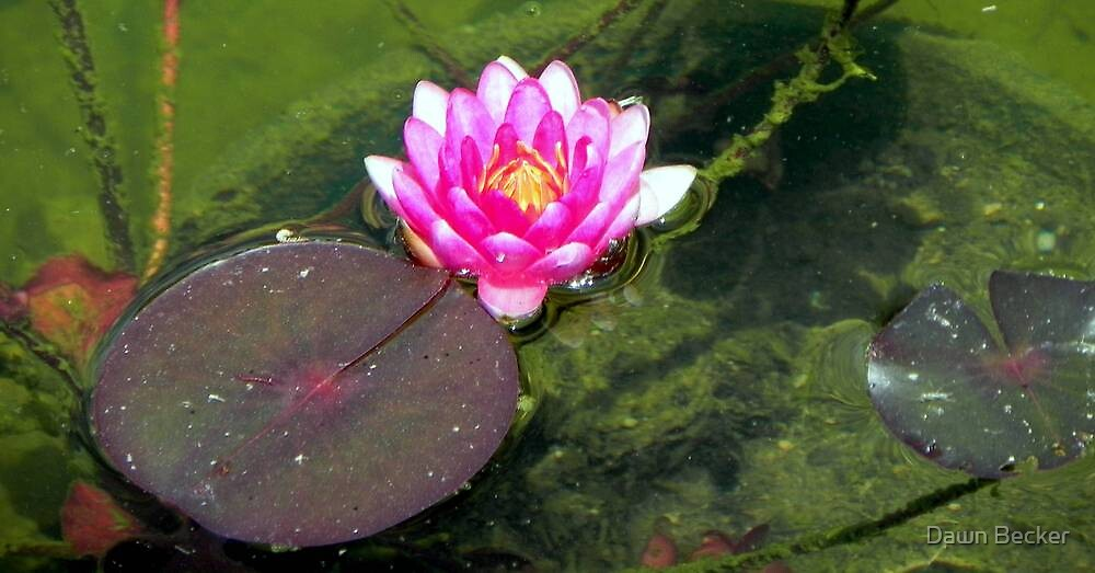 Water Lily © by Dawn M. Becker