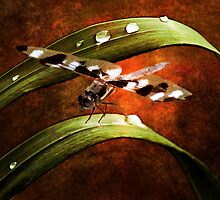 Dragon Wings by KBritt