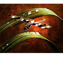 Dragon Wings Photographic Print