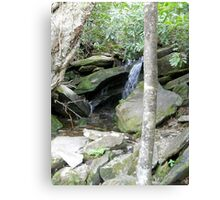Playing in the Great Smoky Mountains Canvas Print