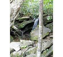 Playing in the Great Smoky Mountains Photographic Print