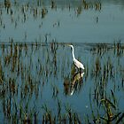 Egret Early Morning  by Harry Blum