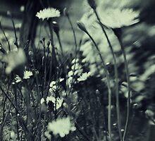 Dandelions by Nicola Smith
