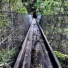 Suspension Bridge - Beedlup Falls WA by Bev Woodman