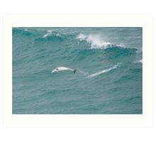 Surfing Dolphins. Art Print