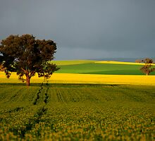 Fields of Gold by Sarah Donoghue