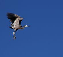 Should I fly or should I land? by Gili Orr