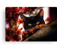 Peeping Tom Canvas Print