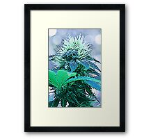 Cartoon Bud Framed Print