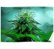 Cannabis Bliss Poster