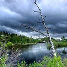 River Birch in Early Spring by Joe Jennelle