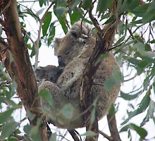 Koala and baby by Kylie Jones