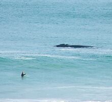 Surfing with Whales. by Kylie Jones