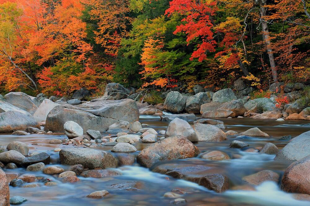 Autumn Glory by Cameron B