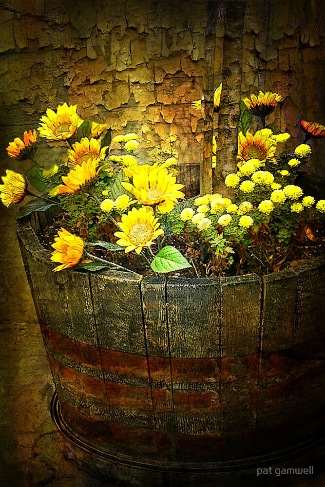 Barrel Of Beauty by pat gamwell