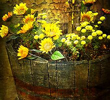 Barrel Of Beauty by pat gamwell