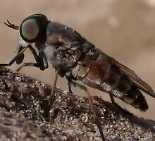 March Fly by jono johnson