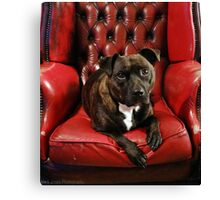 King of the house Canvas Print