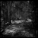 Trees 1 by PetroniusArbit